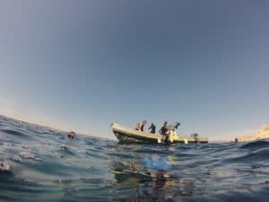 snorkeling soiree